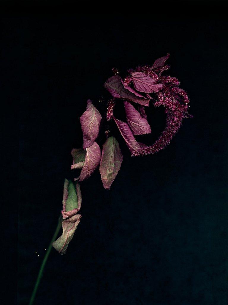 agnes-tanuki-a-personal-herbarium-3.jpg