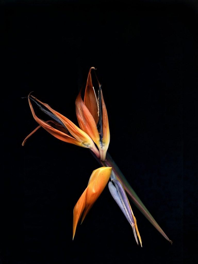 agnes-tanuki-a-personal-herbarium-7.jpg
